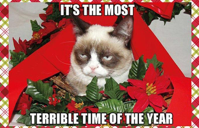 december cat meme